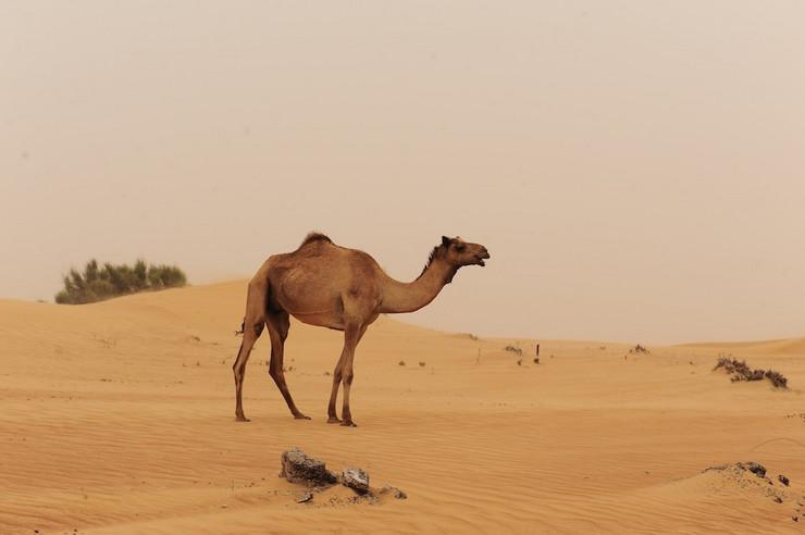 kamila02 foto Wikipedia