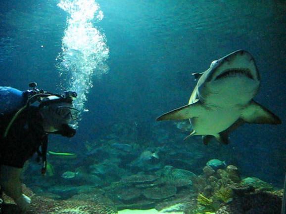 Život ispod mora