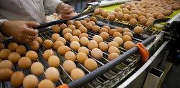 Polscy producenci jaj zaniepokojeni. Zagraża im konkurencja ze wschodu