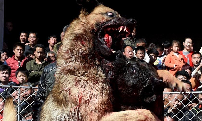 Walki psów