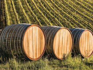 three wood barrels in vineyard