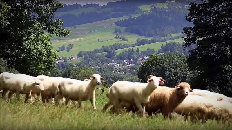 Wieś Ząb