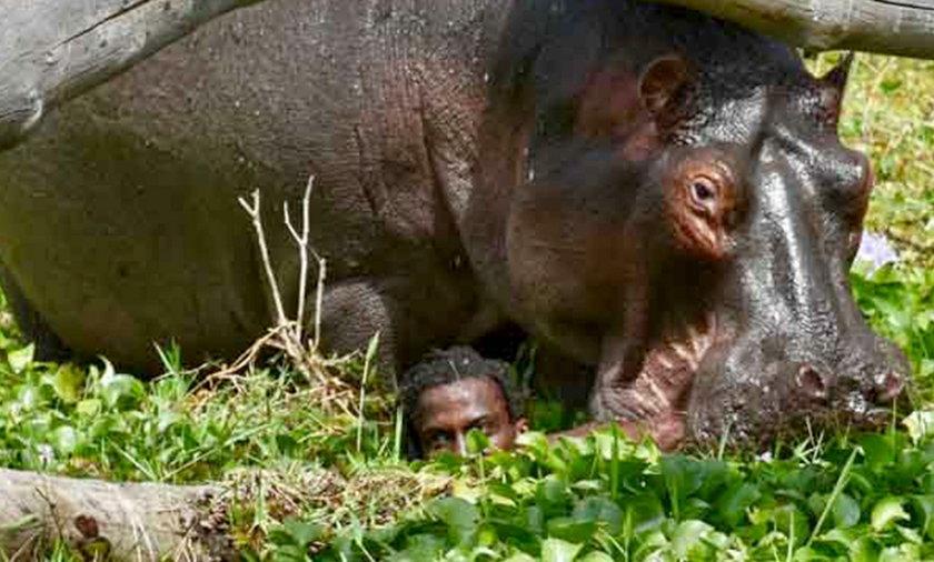 Atak hipopotama