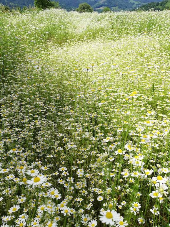 Hektari su pod različitim vrstama bilja