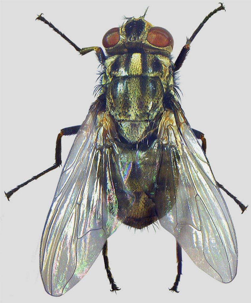 Jak walczyć z owadami?