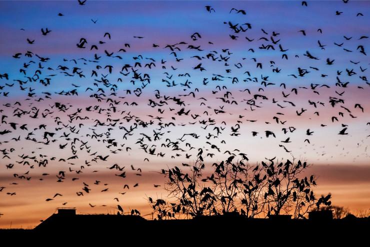 Ptice na Novom Beogradu