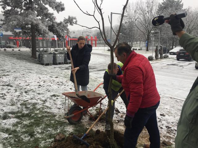 Tatjana Mirković zasadila drvo