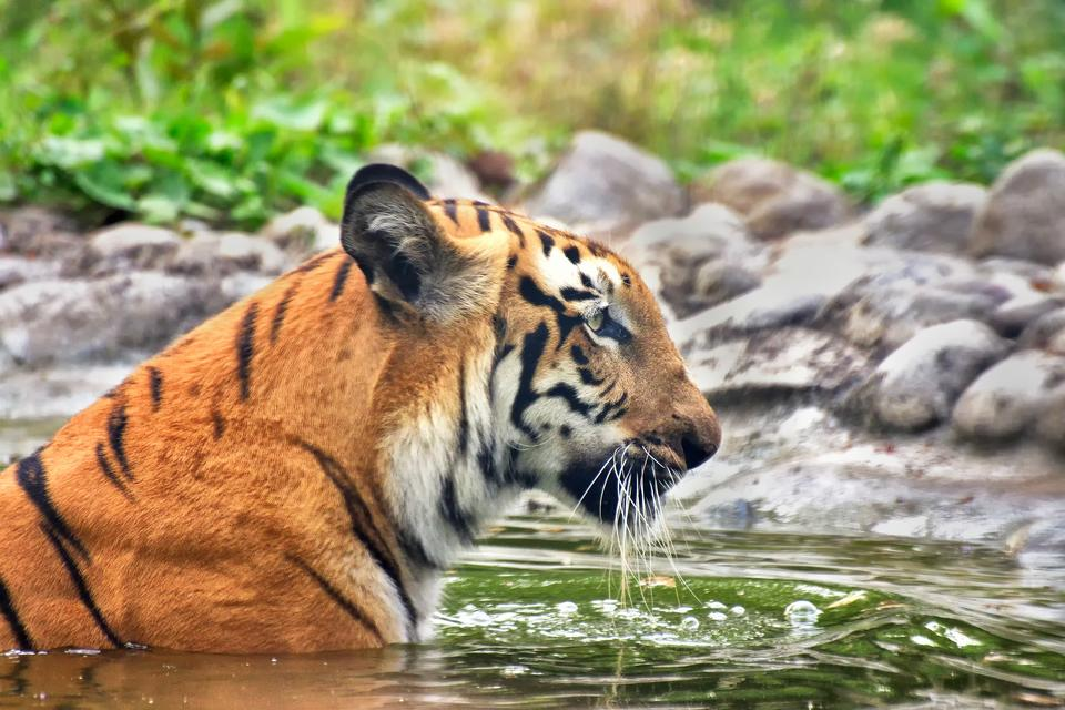 Sundarbany, Indie i Bangladesz