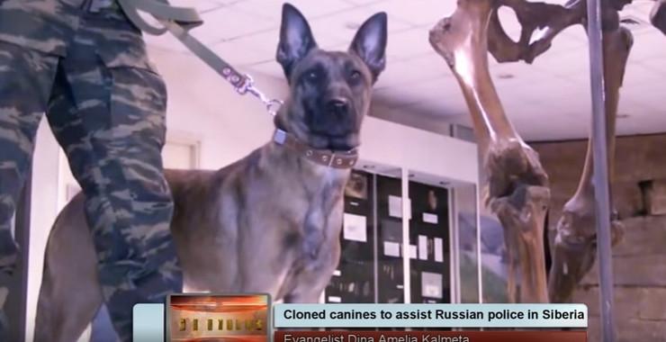 Klonirani psi Rusija