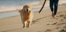 Właściciel psa wykupił reklamę za 6 mln dolarów