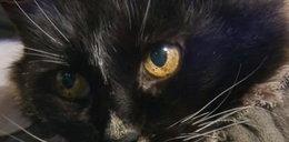 Po 13 latach zaginiona kotka wróciła do domu!