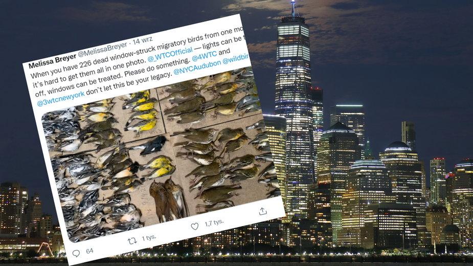Setki martwych ptaków na ulicach Nowego Jorku