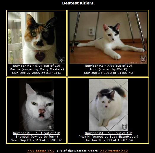 Do Porannej Kawy Koty Wyglądające Jak Hitler Mają Swoją Stronę