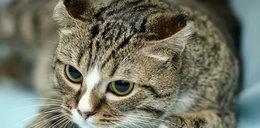 Co mówi twój kot?