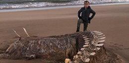 Tajemniczy szkielet wyrzucony na brzeg. Co to jest?