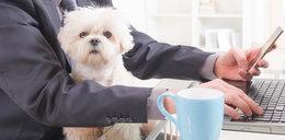 Polacy podzieleni w sprawie psów. Jakie jest twoje zdanie?