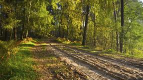 Bory Tucholskie - najciekawsze szlaki rowerowe i towarzyszące im atrakcje