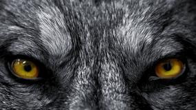 Wilkołak czy chory człowiek?