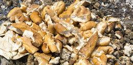 Polacy przez cały rok, w każdej sekundzie, wyrzucają184 bochenki chleba!