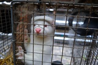 Fogiel: Będą rekompensaty dla tych, którzy stracą w wyniku ustawy o ochronie zwierząt