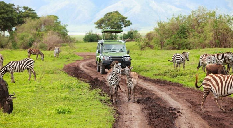 Kenya wins 'World's leading safari destination' at World Travel Awards 2020