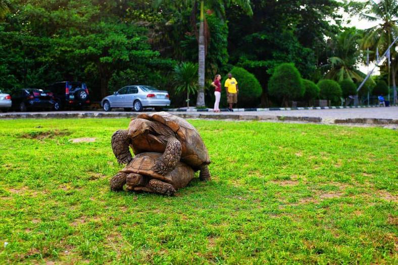 Tortoises at Lekki Conversation Centre
