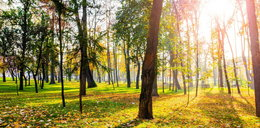 Idzie złota polska jesień