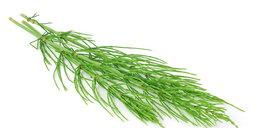 Wycofują zioła ze sprzedaży! Były skażone bakteriami