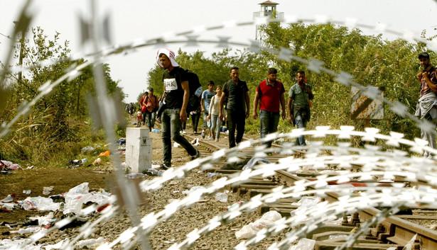 Imigranci przy granicy serbsko-węgierskiej