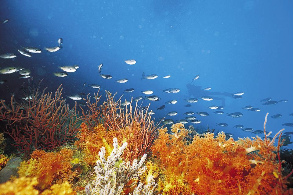 W 2007 roku wpisano wulkaniczną wyspę Czedżu i tamtejsze jaskinie lawowe na listę światowego dziedzictwa UNESCO