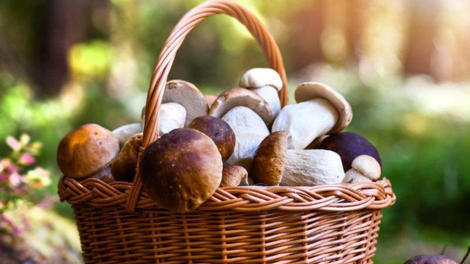 Koszyk pełen grzybów.