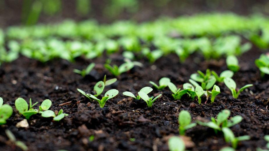 W przypadku niektórych warzyw zabieg przerywania jest niezbędny - ChemiQ/stock.adobe.com