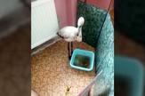 YT_flamingo_pogresno_skrenuo_pri_putovanju_vesti_blic_safe_mr4