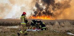 Pożar w Biebrzańskim Parku Narodowym. W akcji biorą udział drony i helikopter