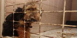 Interwencja służb w schronisku w Radysach! Policja odnalazła psa z odgryzionym fragmentem szczęki