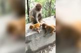 YT_Majmuni_ne_diraj_mi_dete_vesti_blic_safe