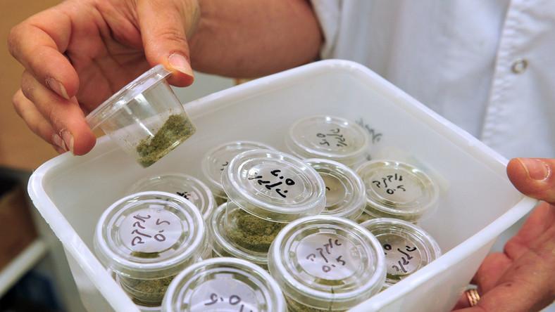 Marihuana medyczna
