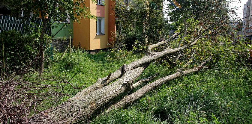 Półroczna Lilianna nie żyje. Zabił ją konar drzewa