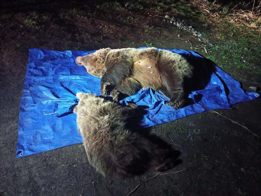 W Tatrach zastrzelono dwa niedźwiedzie.