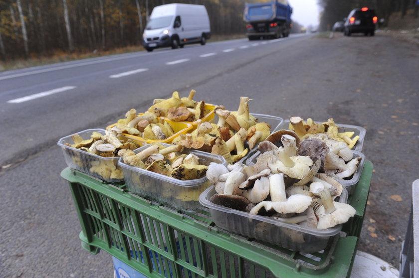 Lasy są pełne grzybów nawet późną jesienią