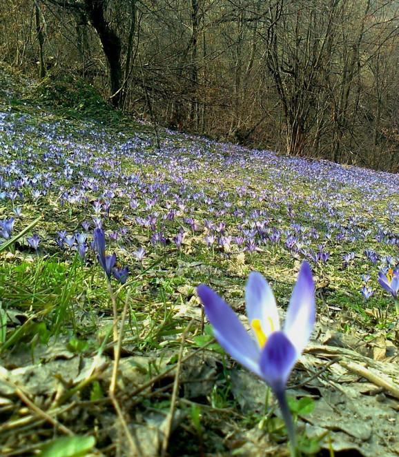 Najljepše Slike Proljeća Za Pozadinu Slike Za Pozadine