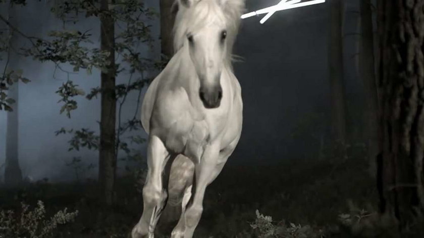 Górniak zakochana w... koniu!