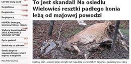 Końskie zwłoki leżą od majowej powodzi