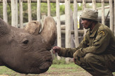 Sudan nosorog