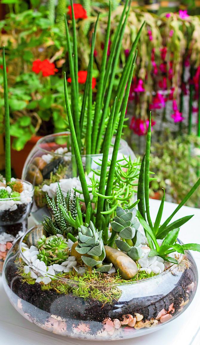 Za bašticu izaberite jednostavnu pliću staklenu posudu