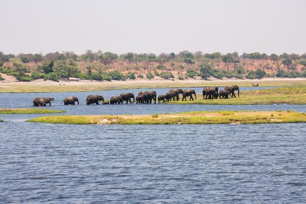 Słonie biorące kąpiel w jeziorze