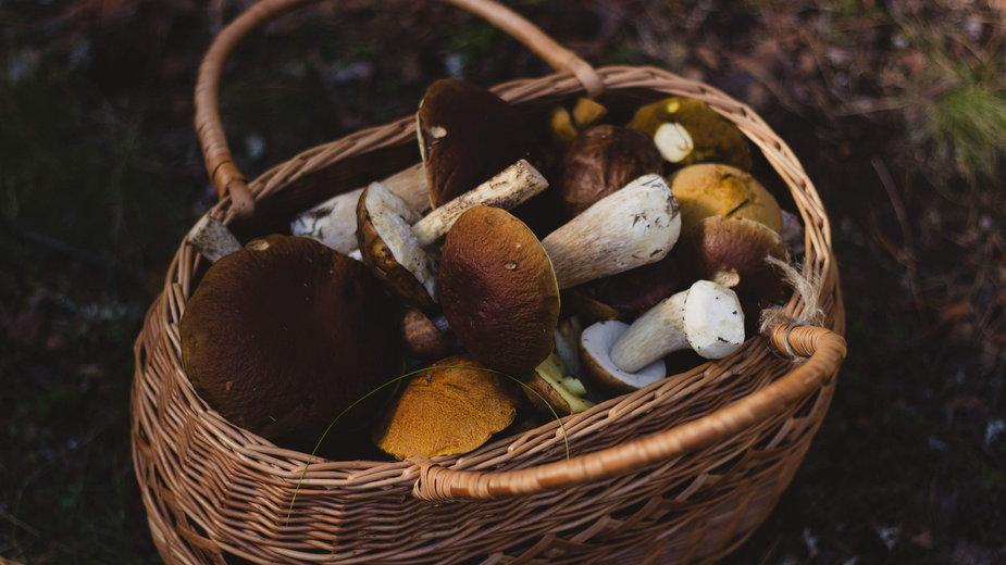 Jak długo gotować grzyby?