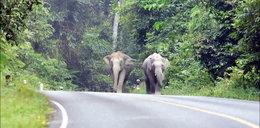 Kierowca wjechał w słonia, zwierzę zmiażdżyło go razem z samochodem