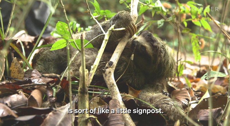 The extreme life of a sloth