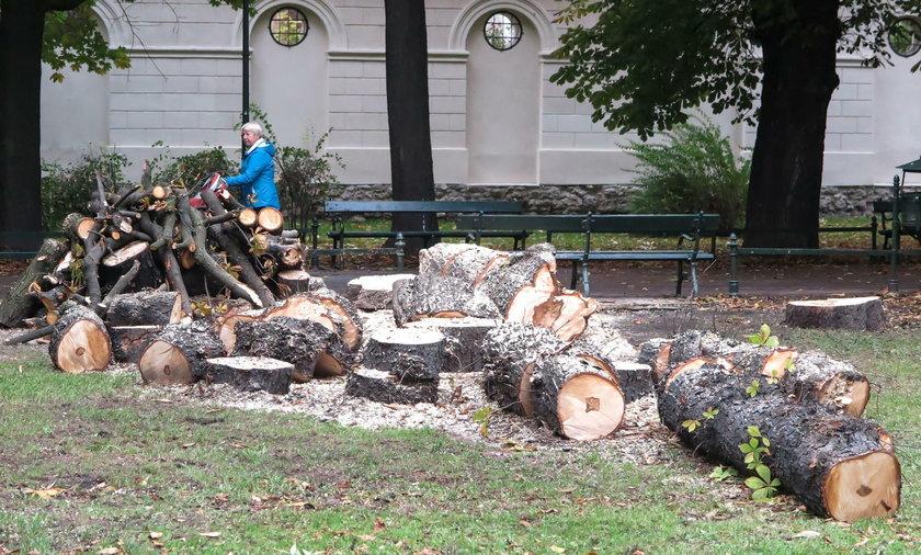 W Krakowie wycinają drzewa